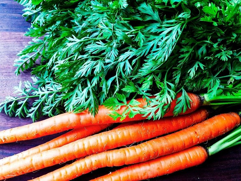 Fresh Carrots with Green Leafy Tops.